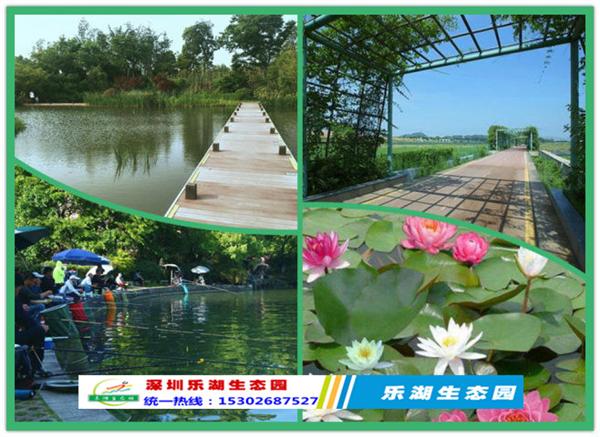 改革开放40周年之际深圳乐水生态园勇立潮头话发展