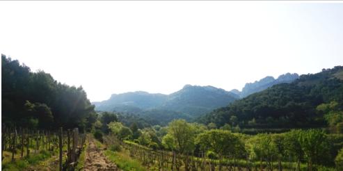 """寻味罗纳河谷的""""清新感"""" The Fascinating Freshness in Rhone Valley Wines"""