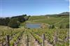 新西兰葡萄酒