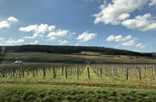 葡萄牙葡萄酒亮点赏析 Passport to Portugal - Wine Highlights