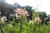 松山湖松湖生态园2020年春节暂停营业通知