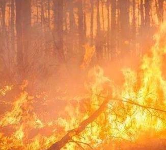 西昌3.30森林大火 19名同志不幸遇难