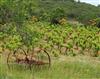 法国鲁西永:优质红葡萄酒和白葡萄酒的故乡