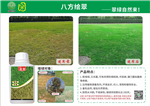 冬季草坪快速增绿复绿草坪...