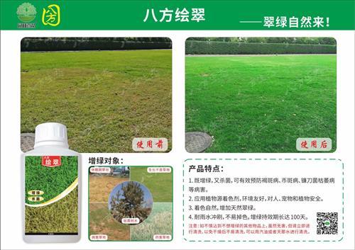 冬季草坪快速增绿复绿草坪染色剂