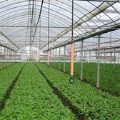 蔬菜大棚喷灌