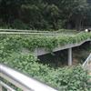 深圳市罗湖区(人民南路,沿河,北斗)人行天桥及深南沿河立交桥等垂直绿化微喷系统