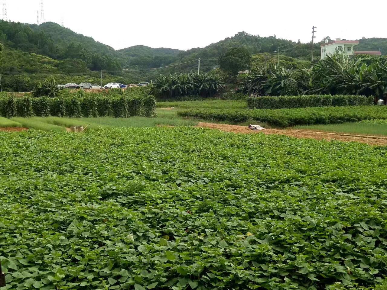 深圳周边农家乐松岗菜博士农场环境图片