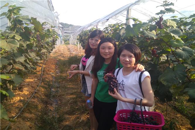 华为员工深圳泥巴园农场采摘葡萄