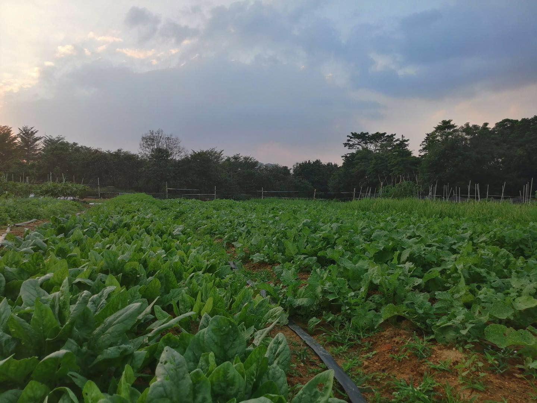 松山湖绿野生态园生态环境