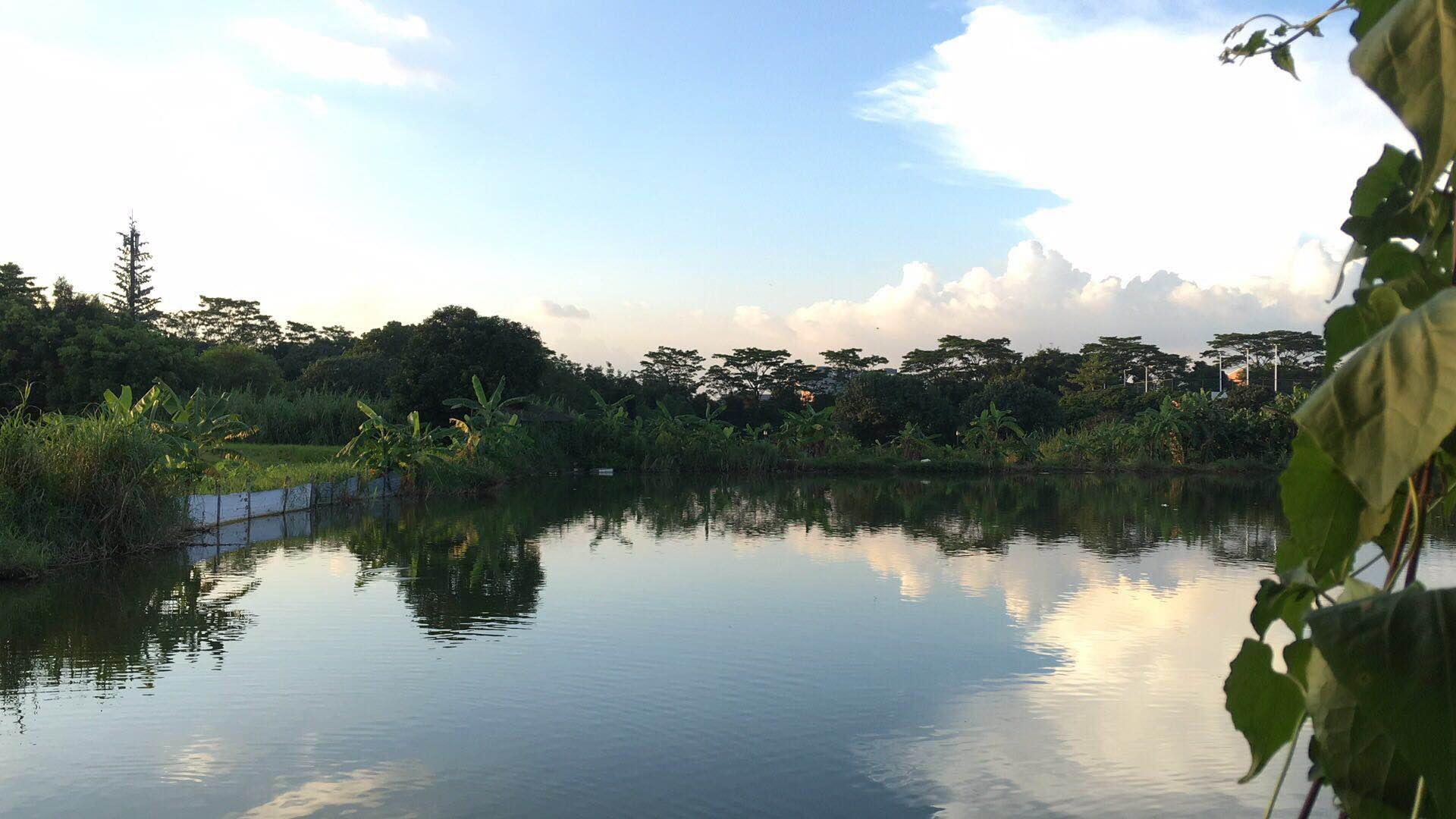 绿野生态园环境