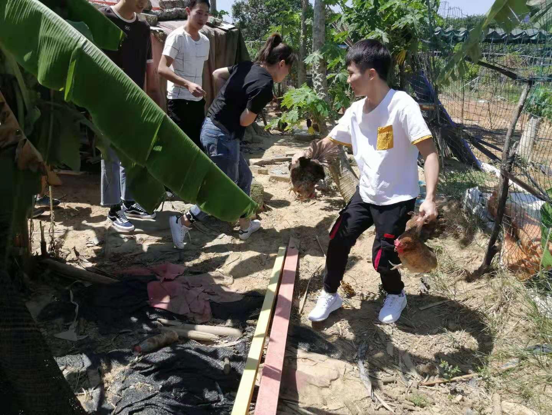 松山湖华为某部在东莞农家乐绿野生态园抓鸡