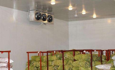 果蔬保鲜冷库设计要点需要按照什么要求?