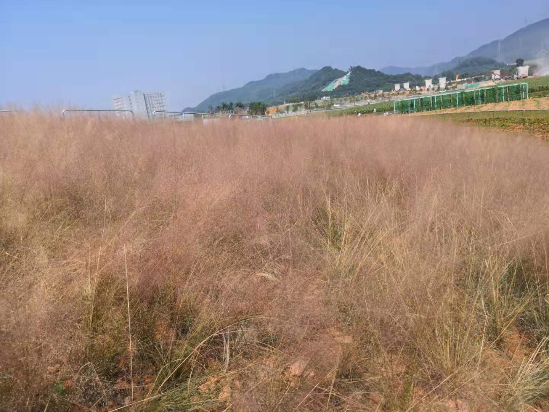 图为:深圳农家乐—乐湖生态园