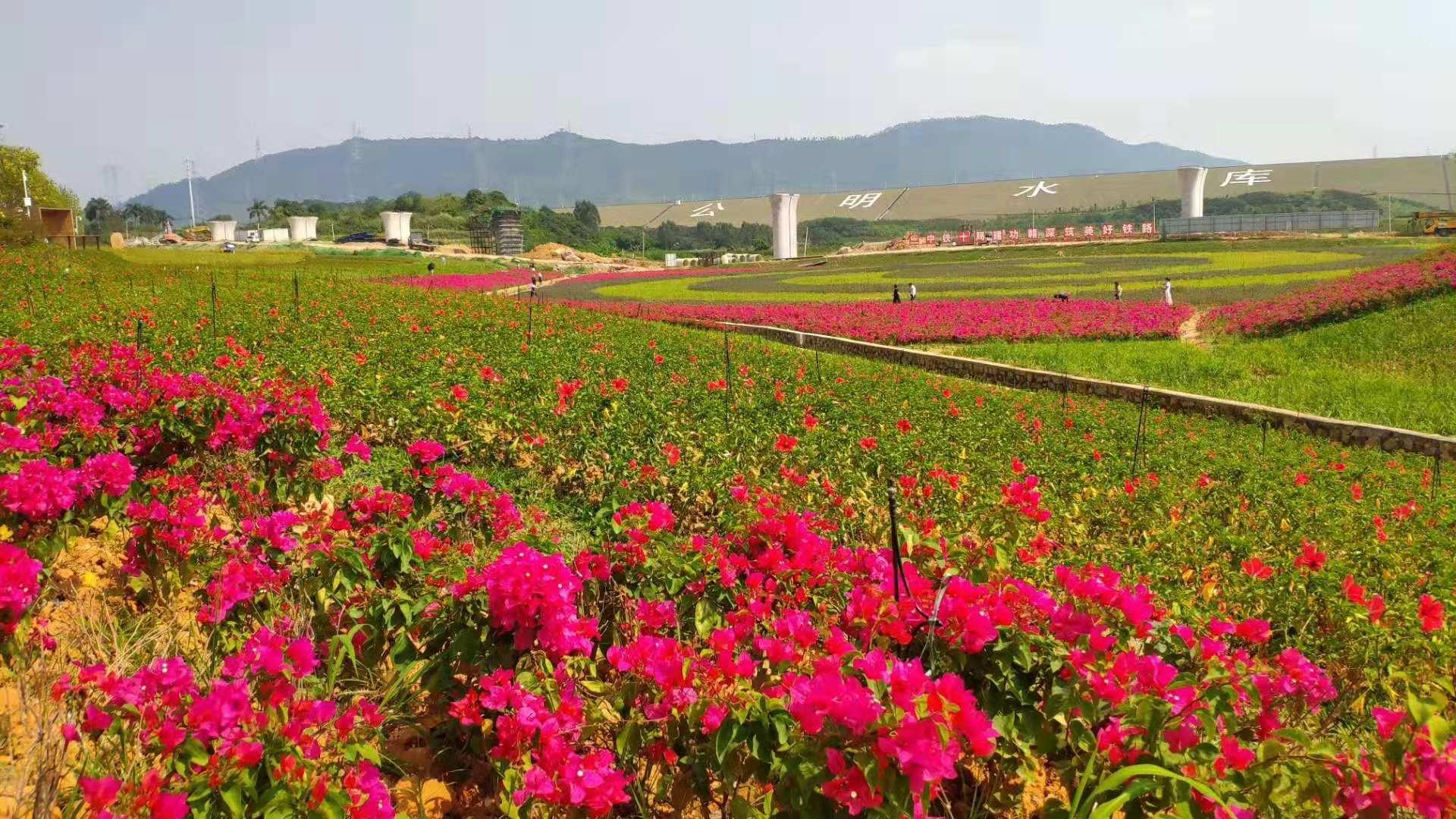 深圳农家乐-宝安乐湖生态园