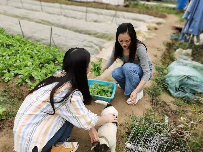 深圳农家乐一日游推荐