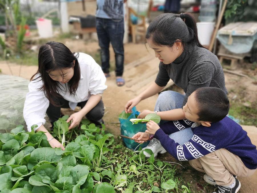 深圳某公司在乐水山庄蔬菜基地采摘青菜进行柴火野炊