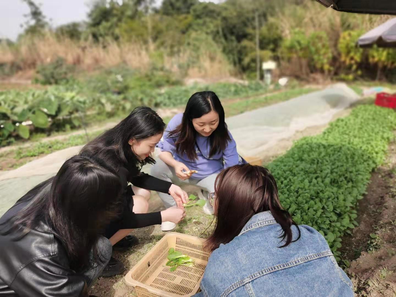 深圳农家乐-乐水山庄野炊活动:采摘蔬菜