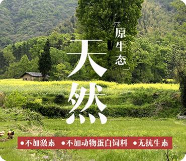 湖南长沙滕飞禽类养殖