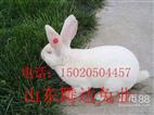 獭兔养殖效益