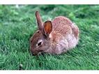 大型兔子养殖