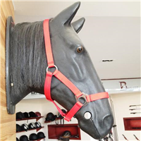 HORSE103 horse  bridle
