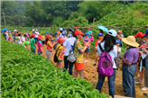 深圳农家乐宝安湖尔美生态农场出游活动有哪些可取之处