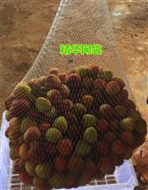 荔枝网袋龙眼网袋10-20斤装