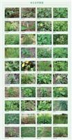 园林绿化苗圃地化学除草之一