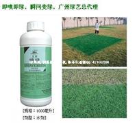 草坪喷绿染色剂兰月草坪专用及时增绿剂