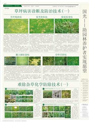 草坪病害的防治