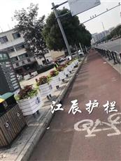 杭州市花箱白菜网彩金新款