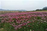 乐湖生态园赏花拍照