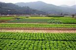 乐湖生态园摘菜