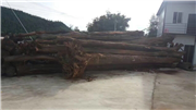 瑞丽木材进口转关业务马上就要开始啦