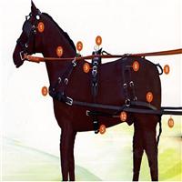 HORSE107 horses took belt