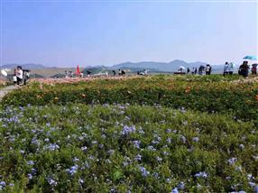 深圳农家乐-乐湖生态园:最美欢乐田园花海