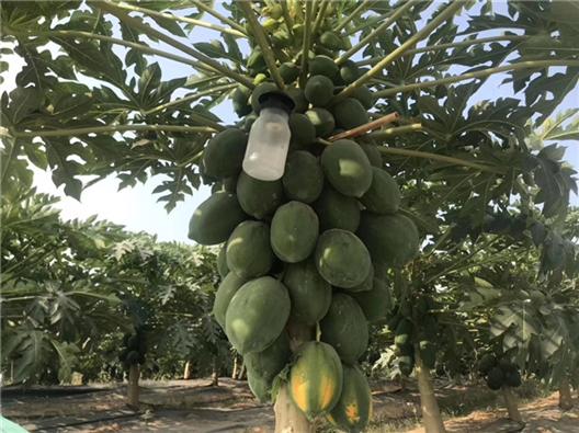 深圳农家乐-乐湖生态园:蔬果采摘