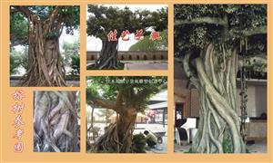 水泥榕樹包柱子佳木斯廠家直銷