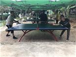 乒乓球-万荔生态园休闲项目