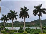 深圳凤凰山田中园农家乐生态园-凤凰山生态园农家乐介绍