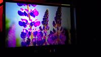 单机双镜头偏光3D家用投影机客户案例五