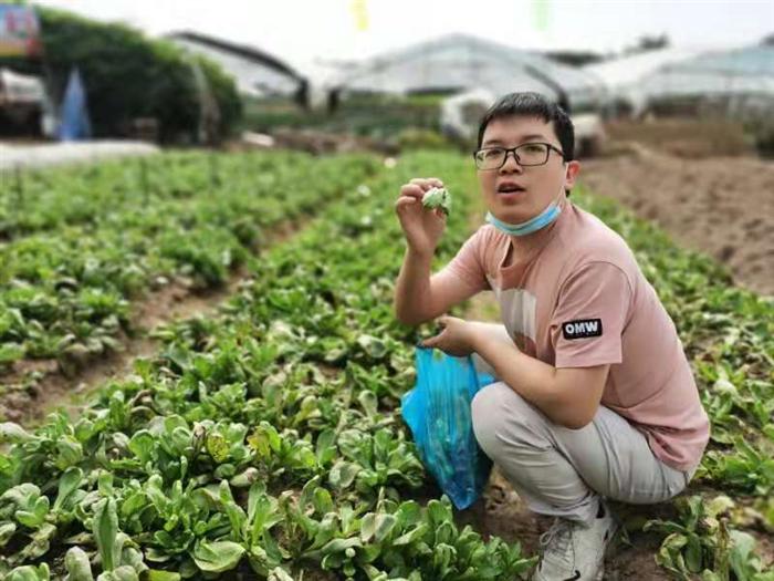 游客在乐水山庄采摘基地采摘绿色蔬菜